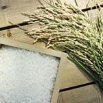 農産工房 金沢大地の平成25年産新米の販売が始まりました!