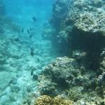 沖縄パワーがぎっしり!浜比嘉島産有機JAS認定の月桃(げっとう)と久米島海洋深層水を使用したコスメ・琉白