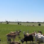 市民電力と農業と地域づくりを学ぶデンマーク&ドイツ スタディツアー