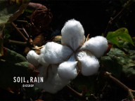 soilandrain_bioshop