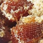 日本ミツバチの採蜜見学!vol.1