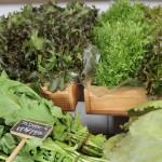 イタリア野菜を作り、「イタリア野菜&セレクトショップA.PUTEC」を経営する、シルビオ カラナンテさんと花田愛さんご夫妻