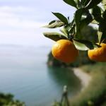 新しい農業と経済のかたちを取り込み変化しつづける無茶々園のプロダクト。有機栽培の柑橘類をたっぷり使ったコスメブランド「yaetoco」