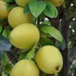 ホワイトデーにリクエストしたい!フカフカの材木の土壌で育つ果実で作られている。奈良・吉野で明治36年から果樹を栽培する堀内果実園のドライフルーツ