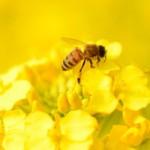 銀座ミツバチの屋上庭園に、ギリシャ医学のハーブガーデンを再現