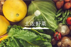 土佐野菜 (7)