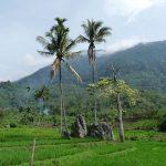 オランウータンと熱帯雨林を守る。小川珈琲から「オランウータンコーヒー」が新発売