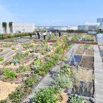 環境省『つなげよう、支えよう森里川海』プロジェクトのアンバサダーMOTHER EARTHとのコラボレーションでリニューアルされた《都会の農園》