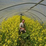 有機栽培するなら、その種も有機種子であってほしい―固定種の小松菜の有機種子、発芽豆キット、オーガニック「ねこ草」栽培キットも登場《株式会社グリーンフィールドプロジェクト》