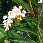 【クレヨンハウスと仲間たち】沖縄から女性専用鍼灸サロンひだまり堂のオーガニック「月桃」を使った温熱ケア