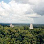 古代マヤ時代から続く森を守りたいから。森の天然スーパーフード「マナヤッツ」を紹介する《グアテマヤ》