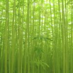 地球と人に優しい植物「ヘンプ」の無限の可能性。麻でありながら繊細で柔らかな〈麻福〉の製品で、ナチュラルライフを愉しむ