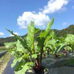 夏休みの宿題対策に!《京丹後 自然耕房あおき》の在来種と固定種野菜の畑で、生き物観察ができる自然農法体験スタディツアー