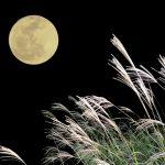 【自然療法家 宮本ちほのナチュラルライフ Vol.4】お月見を楽しむ。月のリズムと身近なパワーフードで秋の体調ケア