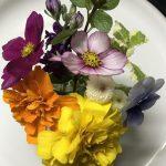 食べられるお花「エディブルフラワー」を有機農法で育てている東京・清瀬市の横山園芸を訪ねて