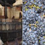 ゆっくりとブドウの良さを引き出す昔ながらの製法で造るオーガニックボジョレーヌーヴォー予約受付中