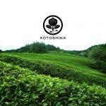 京都発 オーガニックコスメブランド「コトシナ」から有機緑茶成分配合のハンドソープを新発売