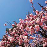 【 五十嵐和恵の季節に合わせた暮らし方 Vol.1 】 ポジティブ・エイジングをアドバイス-2019.2.4~5.5春の過ごし方&食べ方