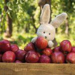 babybio(ベビービオ)ベビースムージーの原材料は、有機くだものと有機野菜だけ!8月の発売に先がけて紹介する《株式会社ミトク》